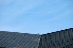 Een dak met vogels Royalty-vrije Stock Afbeeldingen