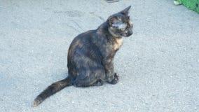 Een dakloos grijs katje in de straat 4K stock video