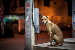 Een dakloze hond Stock Fotografie