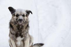 Een dakloze hond met een droevige die blik met sneeuw wordt bestrooid stock afbeelding
