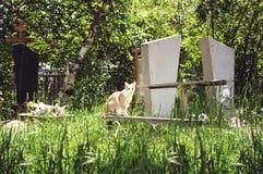 Een dakloze kat zit op een bank in een oude begraafplaats stock foto's
