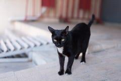 Een dakloze zwarte kat wandelt rond de straat stock afbeelding