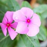 Een daling op bloem royalty-vrije stock afbeelding