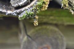 Een daling op het mos royalty-vrije stock foto's
