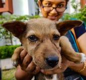 Een dame die een Indisch straatpuppy houden die camera onder ogen zien die anim tonen royalty-vrije stock afbeeldingen
