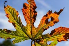 Een de herfstblad Royalty-vrije Stock Foto