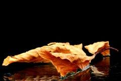 Een de herfstblad Stock Afbeeldingen