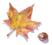 Een de herfstblad en conker Stock Afbeelding