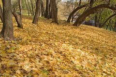 Een de herfstlandschap in een park. Royalty-vrije Stock Foto