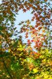 Een de herfstmiddag Royalty-vrije Stock Fotografie