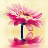Een de lentebloem in uitstekende stijl. Retro achtergrond Stock Fotografie