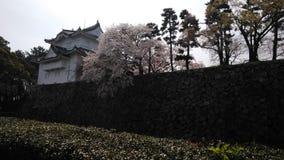 Een de lentedag bij het kasteel van Nagoya dat door kers wordt omringd blosoms royalty-vrije stock foto's