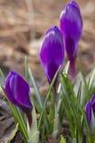 Een de lenteochtend Stock Afbeelding