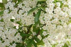 Een de lentetijd in Griekenland Royalty-vrije Stock Afbeeldingen