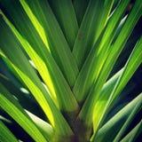 Een de orchideeblad van het backlight reuzesuikerriet Royalty-vrije Stock Foto