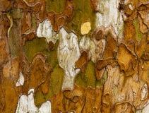 Een de textuuroppervlakte van de boomschors Royalty-vrije Stock Fotografie