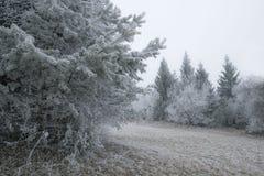 Een de winter berijpt boslandschap Stock Foto