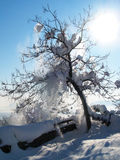 Een de winterboom Royalty-vrije Stock Afbeeldingen