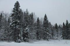 Een de winterbos Royalty-vrije Stock Afbeeldingen