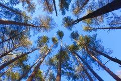 Een de winterbos Stock Afbeeldingen