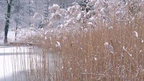 Een de wintergang op een bevroren meer stock footage
