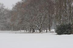 Een de wintermening van bos stock foto