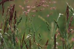Een de zomergebied met grassen Royalty-vrije Stock Afbeelding