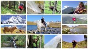 Een de zomervakantie door de montering van alpen stock video
