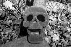Een decoratie van de fluweelschedel voor Halloween Stock Afbeelding