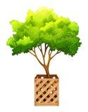 Een decoratieve groene installatie Stock Foto