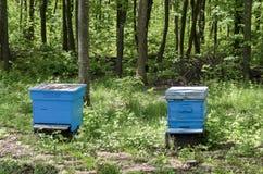 Een deel van bijenstal met mening naar bijenkorf royalty-vrije stock afbeeldingen