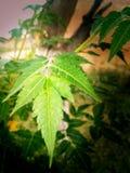 Een deel van bomen - bladeren stock afbeelding