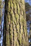 een deel van boomstam royalty-vrije stock afbeeldingen