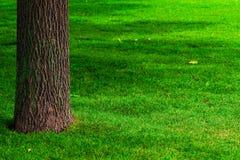 Een deel van de boomstam van een boom en een gazon royalty-vrije stock afbeeldingen