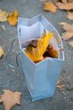 Een deel van de herfst Royalty-vrije Stock Fotografie