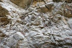 Een deel van gelaagde rotsvorming met ongelijke oppervlakte en kleine installaties in barsten royalty-vrije stock fotografie