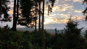 Een deel van het bos met jonge en oude sparren Dawn over de bergketen stock videobeelden