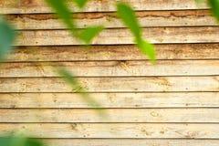 een deel van muur met groene bladeren Houten kaderachtergrond Stock Fotografie