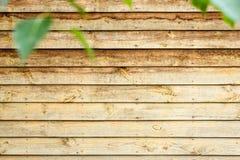 een deel van muur met groene bladeren Houten kaderachtergrond Stock Afbeeldingen