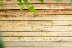 een deel van muur met groene bladeren Houten kaderachtergrond Royalty-vrije Stock Foto's