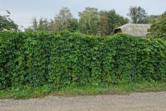 Een deel van een omheining met groene vegetatie met bladeren op de straat wordt overwoekerd die stock afbeeldingen