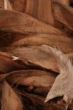 Een deel van palm royalty-vrije stock afbeeldingen