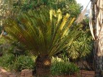 Een deel van een palm in zonlicht en in schaduw stock afbeeldingen