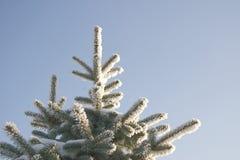 Een deel van sneeuwboom onder de blauwe hemel Stock Foto