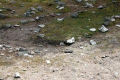 Een deel van een steenlabyrint in Folhammar, Gotland, Zweden stock afbeeldingen