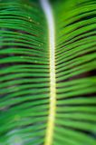 Een deel van tropisch palmblad stock afbeeldingen