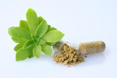 Een detail van een open Homeopathisch capsule en kruidblad stock foto's