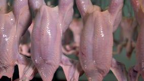 Een dichte mening over naakte kippenkarkassen in detail stock videobeelden