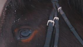 Een dichte omhooggaande mening van het oog van een bruin paard bij sneeuwweer stock footage