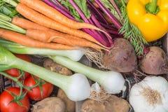 Een dichte omhooggaande mening van vers geplukte groenten stock foto's